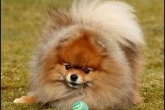 Årets Plush Puppy hund? Møt Mini!