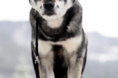 Årets Plush Puppy hund? Møt Varga