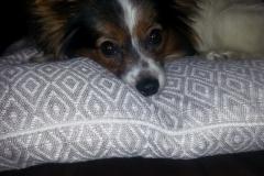 Årets Plush Puppy hund? Møt Embla!