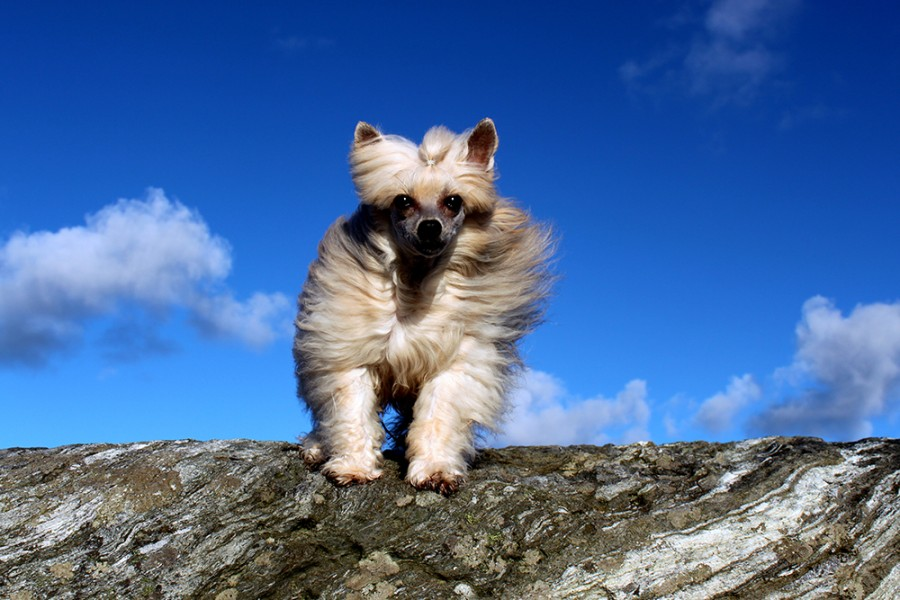 Joy plush puppy