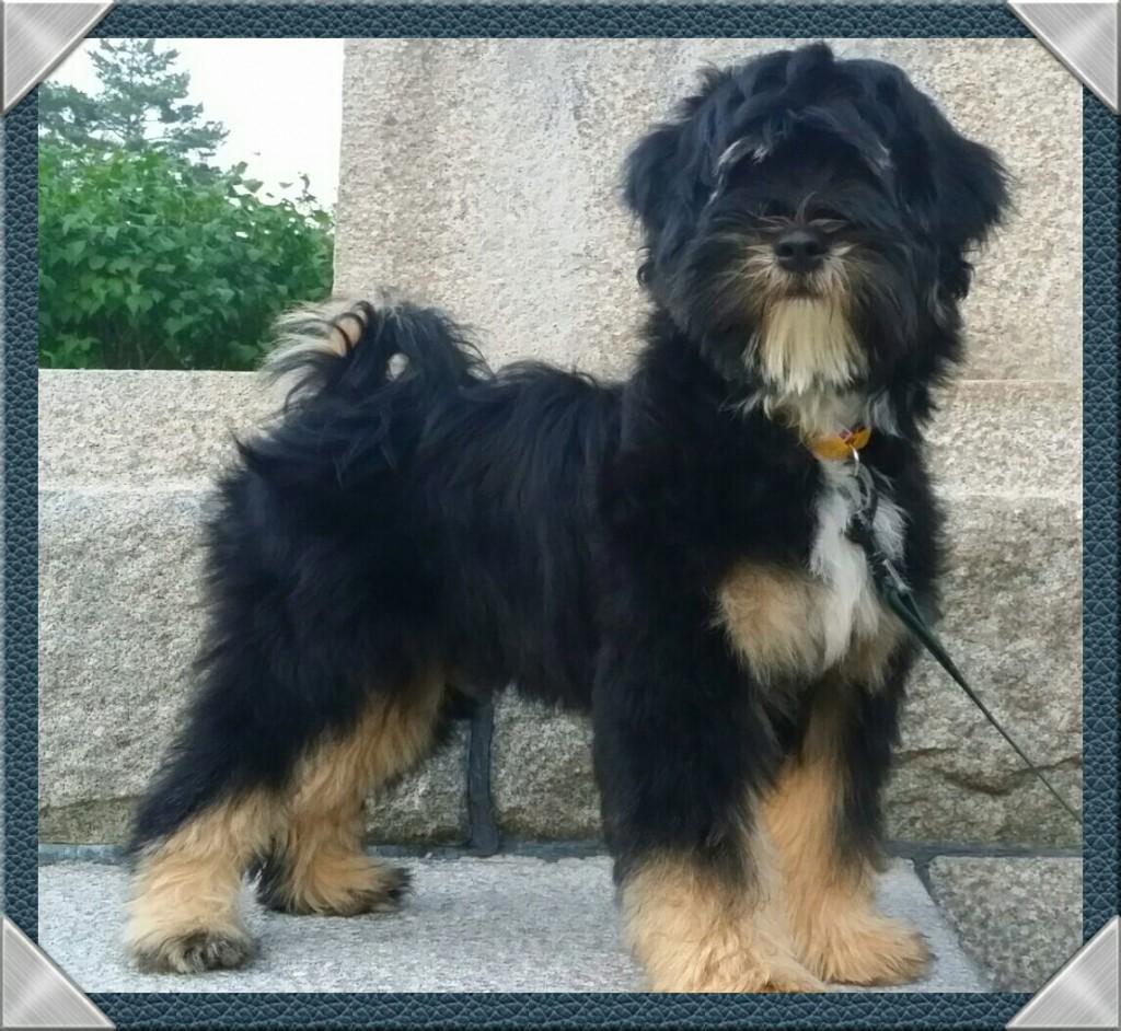 Hunden navn er khyi - Mi Dpong Po Lamleh til daglig Marve