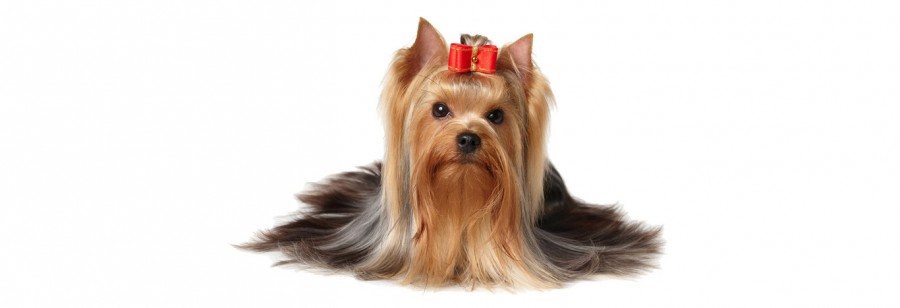 dog-grooming-in-manchester