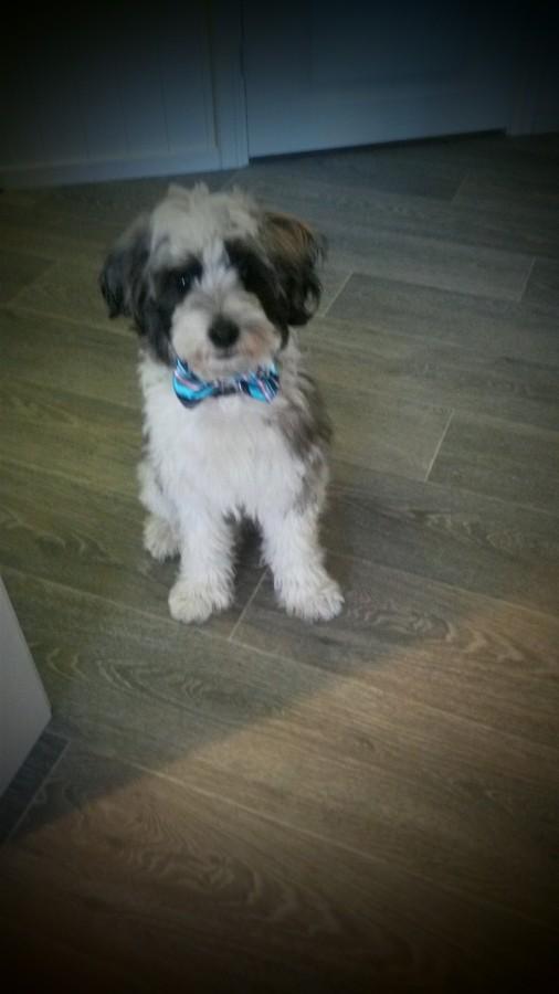 Årets Plush Puppy hund? Møt Albert