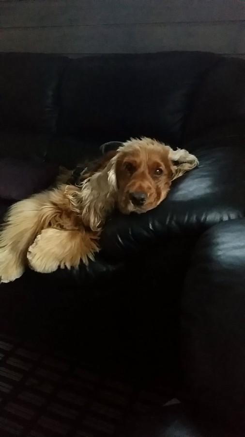 Årets Plush Puppy hund? Møt Aquilo