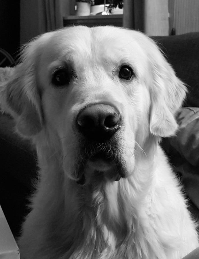 Årets Plush Puppy hund? Møt BIRK