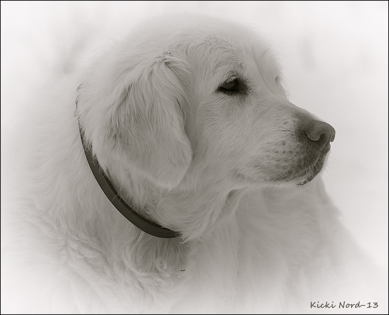 Er dette årets Plush Puppy Hund? Møt Chaveni's Wait'n See!