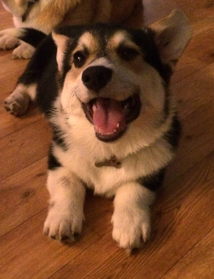 Årets Plush Puppy hund? Møt Knerten