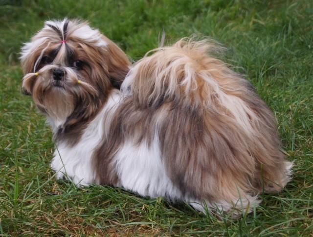 Årets Plush Puppy hund? Møt Maria-My's Flowie My Lovely Girl