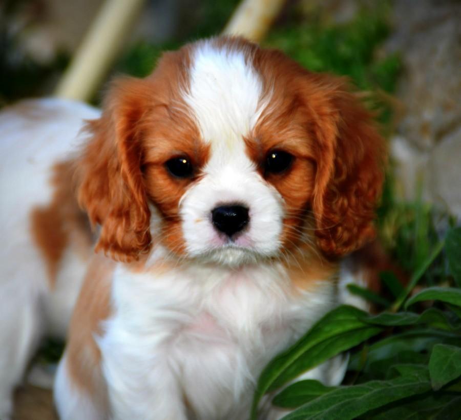Årets Plush Puppy hund? Møt Monty Ferguson