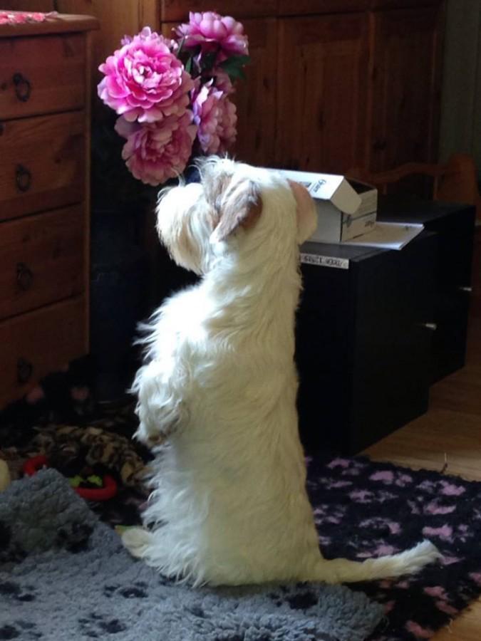 Årets Plush Puppy hund? Møt Sealytoppen`s Cirkeline!