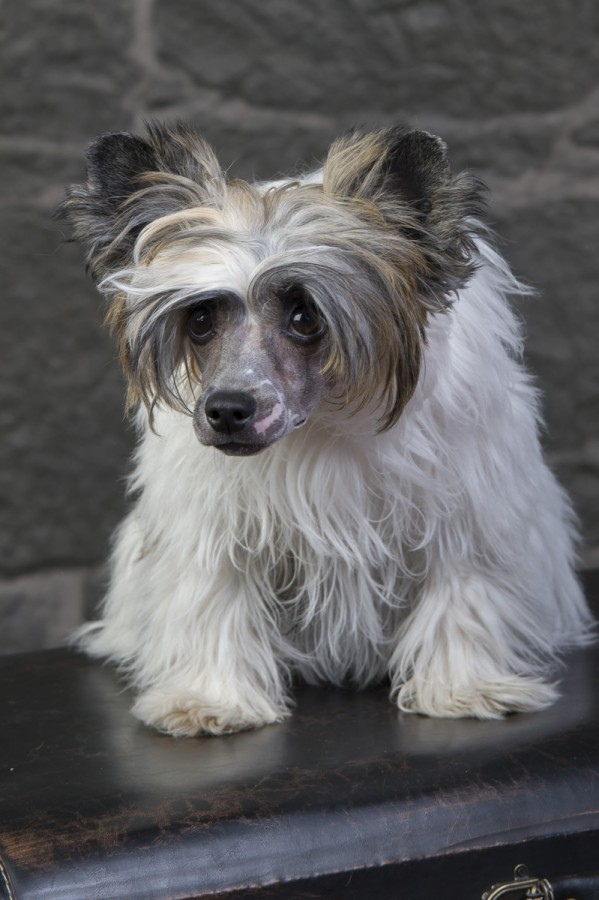 Årets Plush Puppy hund? Møt Dottis!