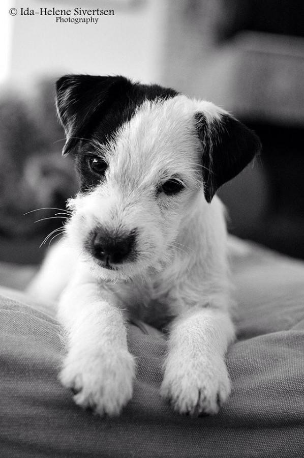 Årets Plush Puppy hund? Møt Effi!