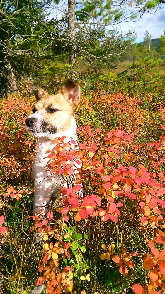 Årets Plush Puppy hund? Møt Happy!