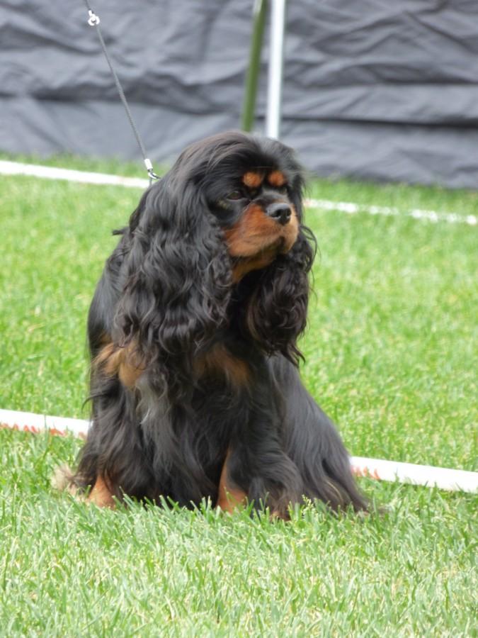 Årets Plush Puppy hund? Møt Lilly!