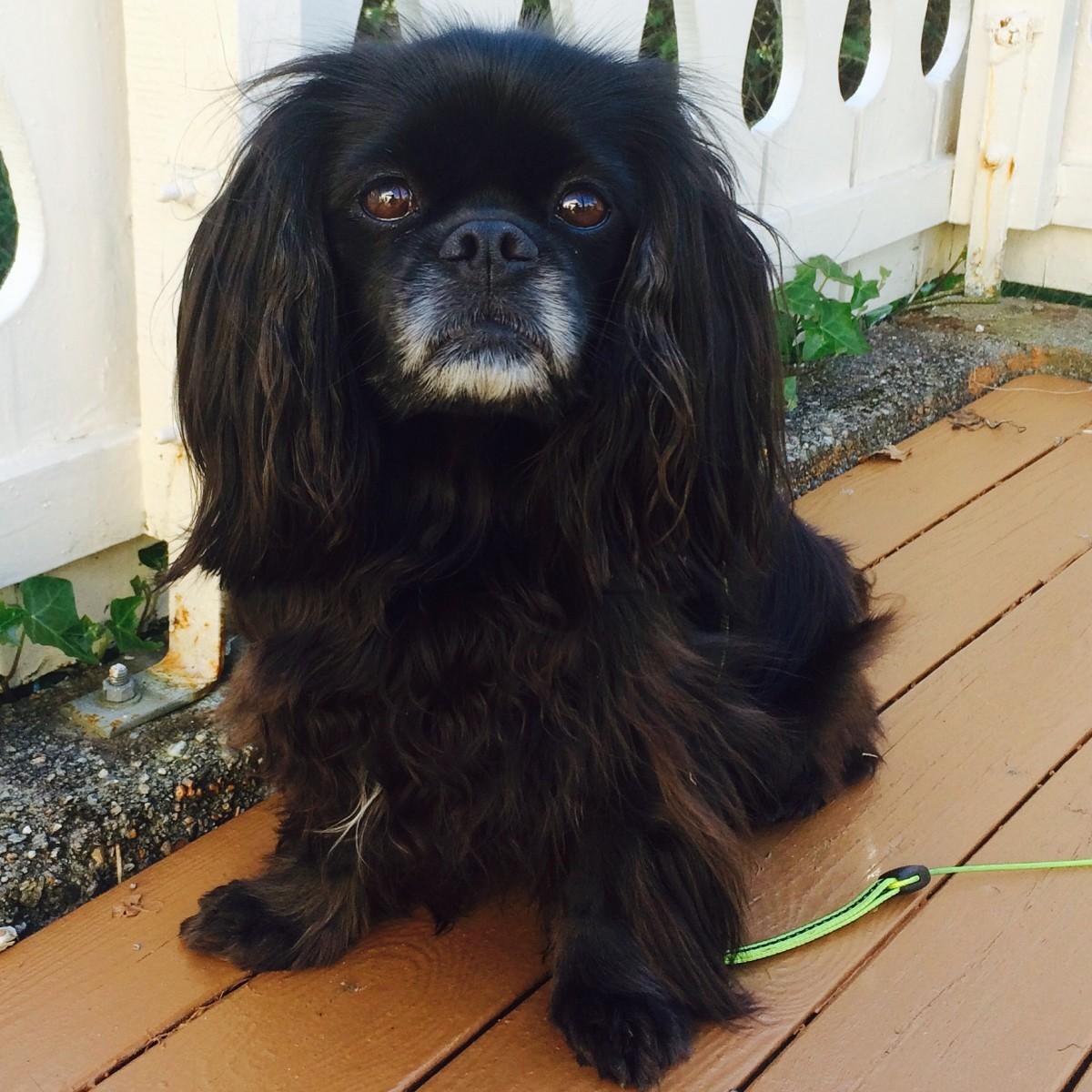 Årets Plush Puppy hund? Møt Molly!