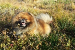Årets Plush Puppy hund? Møt Buster