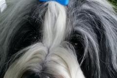 Årets Plush Puppy hund? Møt Charm