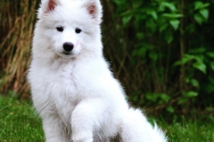 Årets Plush Puppy hund? Møt Floyd!