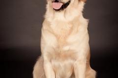 Årets Plush Puppy hund? Møt Maya