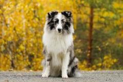 Årets Plush Puppy hund? Møt Kenai!