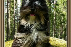 Er dette årets Plush Puppy Hund? Møt Marve!